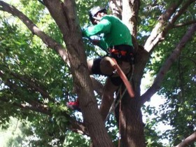Ash-Tree-Pruning-Work