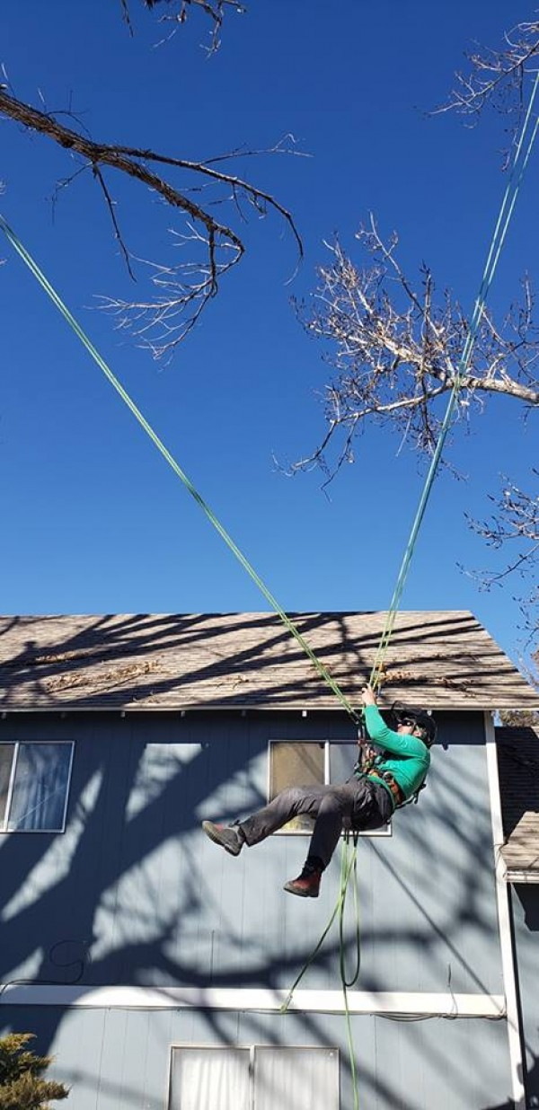 Cottonwood-Branch-M-Climing-System