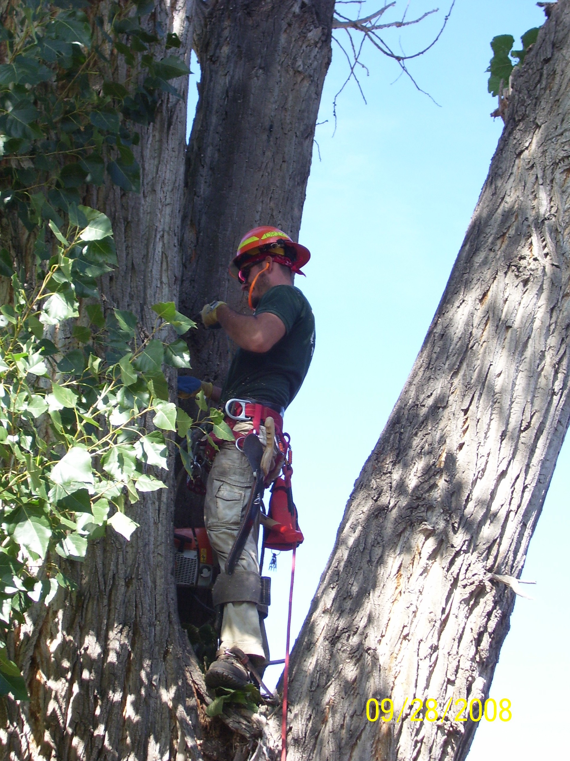 Tree Trimming & Tree Removal Service in Grand Junction, CO
